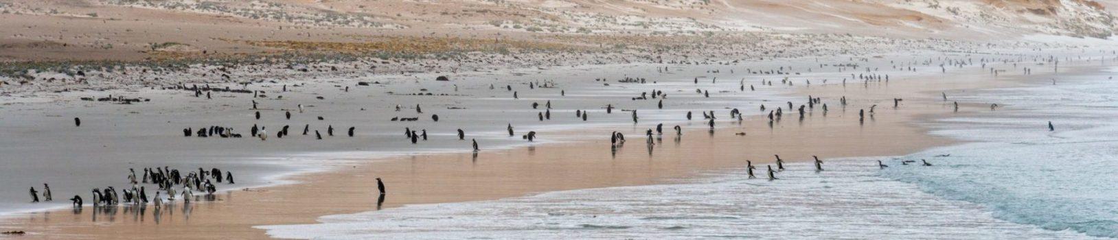 Falkland-Islands-e1565253585713.jpg